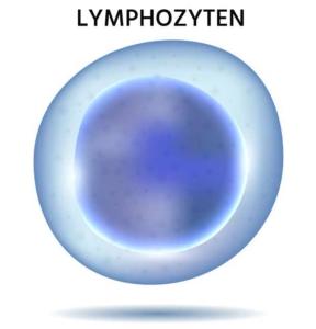 Lymphozyten
