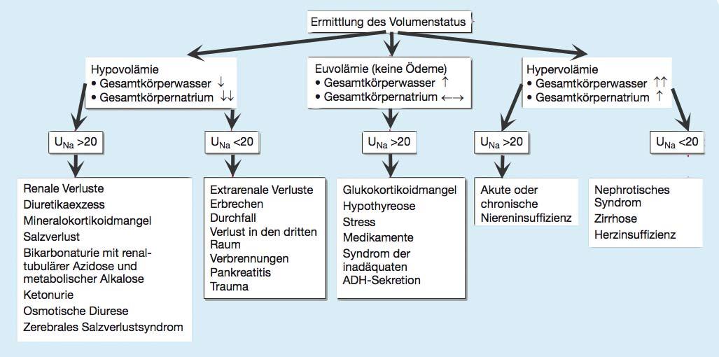 Diagnostisches Vorgehen bei Hyponatriämie