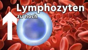 Lymphozyten zu hoch