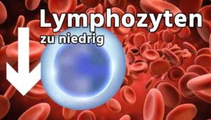 Lymphozyten zu niedrig