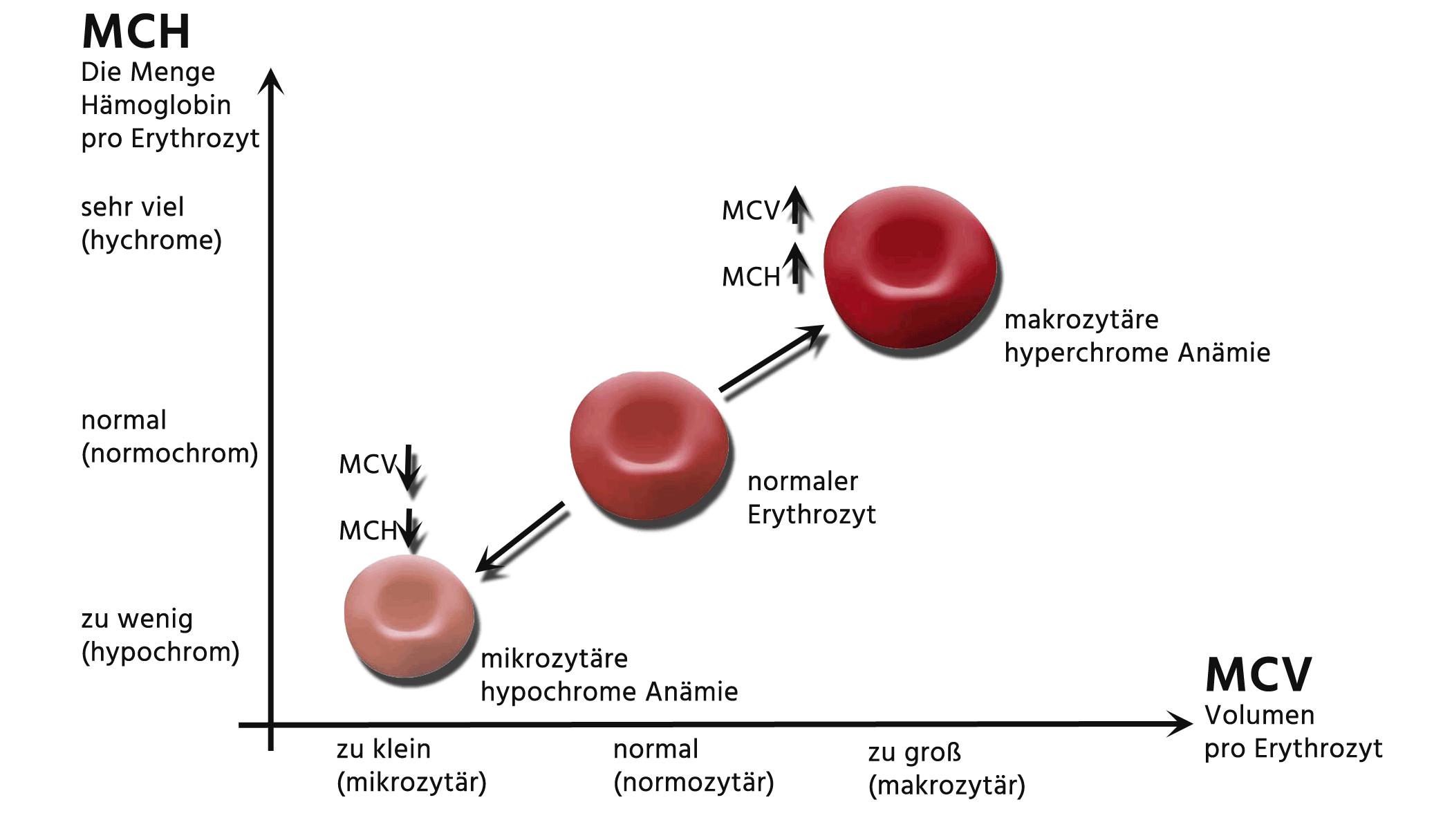 Zu viele thrombozyten