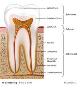 Der Zahnaufbau für eine bessere Sicht