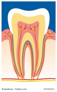 Der Aufbau eines Zahnnervs
